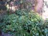 2010_0105_212155dscn0399