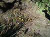 2010_0125_232237dscn0691