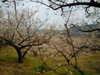 2011_0205_233313dscn1203