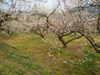2011_0205_233532dscn1206
