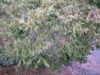 2011_0209_205007dscn1288