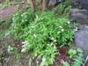 2011_0522_213003dscn1544
