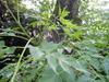 2011_0602_204128dscn1577