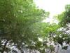 2011_0807_224533dscn1984