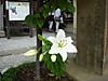 2007_0101_000000dscn4035